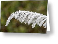 Frosty Frond Greeting Card
