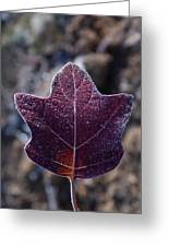 Frosty Lighted Leaf Greeting Card