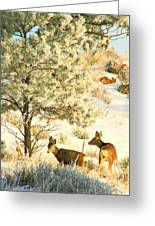 Frosty Lunch ... Montana Art Photo Greeting Card