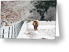 Frosty Mare Greeting Card