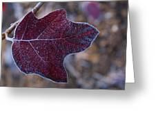 Frosty Maroon Leaf Greeting Card