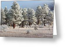 Frosty Pikes National Forest Greeting Card