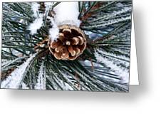 Frosty Pine Cone Greeting Card