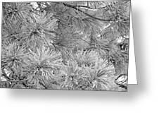 Frosty Pine Tree Greeting Card