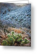Frosty Prickly Pear Greeting Card