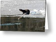 Frosty River Otter  Greeting Card