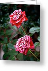 Frosty Rose Greeting Card