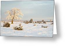Frosty Solitude Tree In The First Morning Sunshine Greeting Card