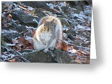 Frosty Squirrel Greeting Card