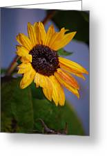 Frosty Sunflower Greeting Card