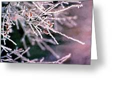 Frosty Twigs Greeting Card