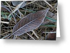 Frosty Veined Leaf Greeting Card
