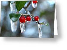 Frozen Berries Greeting Card by Donna Bentley