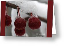 Frozen Crab Apples Greeting Card