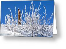 Frozen Fence Post Greeting Card