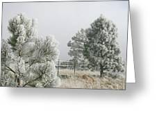 Frozen Fog On Pine Trees Greeting Card