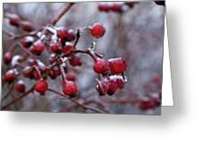 Frozen Fruit Greeting Card