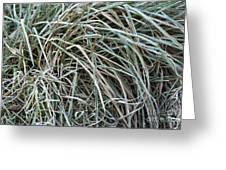 Frozen Grass - Ground Frost Greeting Card