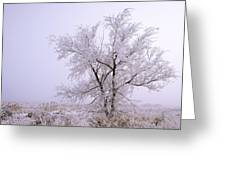 Frozen Ground Greeting Card