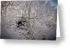 Frozen In Ice Greeting Card