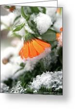 Frozen Marigolg Greeting Card