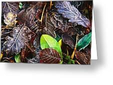 Frozen Oak Leaves, Glenveagh National Greeting Card