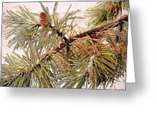 Frozen Pine Greeting Card