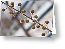 Frozen Seed Capsules In Time Greeting Card