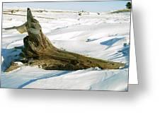 Frozen Shores Greeting Card