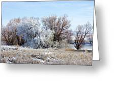 Frozen Trees By The Lake Greeting Card