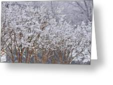 Frozen Trees During Winter Storm Greeting Card