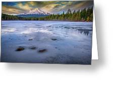 Frozen Trillium Greeting Card