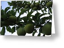 Fruit And Sky_raindrops Greeting Card