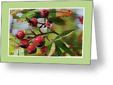 Fruit Of The Wild Rose Greeting Card