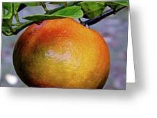 Fruit On The Tree Greeting Card