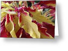 Fruit Roll Up Plant Greeting Card