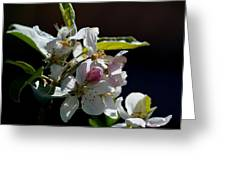 Fruit Tree Blossom 1 Greeting Card