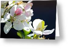 Fruit Tree Blossom Greeting Card