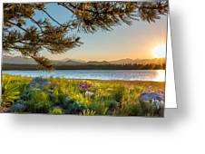 Frye Lake Flowers Greeting Card