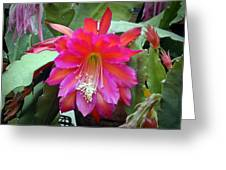 Fuchia Cactus Flower Greeting Card