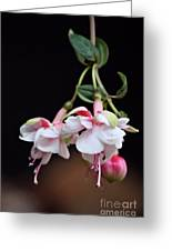 Fuchsia 2 Greeting Card