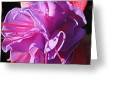 Fuchsia Frills Greeting Card