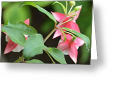 Fuchsia From Above Greeting Card