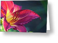 Fuchsia Glow Greeting Card
