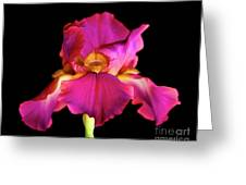 Fuchsia Iris Greeting Card