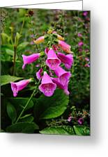 Foxglove Lure Greeting Card