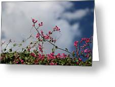 Fuchsia Mexican Coral Vine On White Clouds Greeting Card