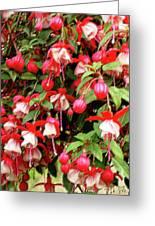 Fuchsia Pastel Greeting Card