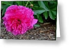 Fuchsia Peony Greeting Card