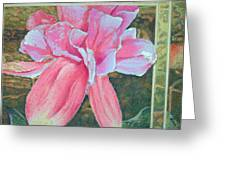 Fucshia Greeting Card